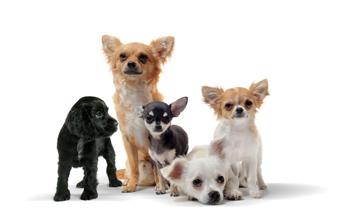 Das richtige Futter für kleine Hunde