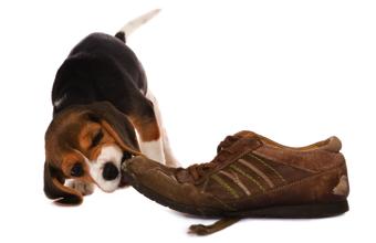 Hundeversicherungen - das gilt es zu beachten