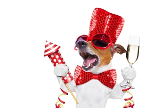 So kommt ihr gut ins neue Jahr - Tipps für Silvester mit dem Hund