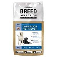 Wildsterne Labrador Retriever